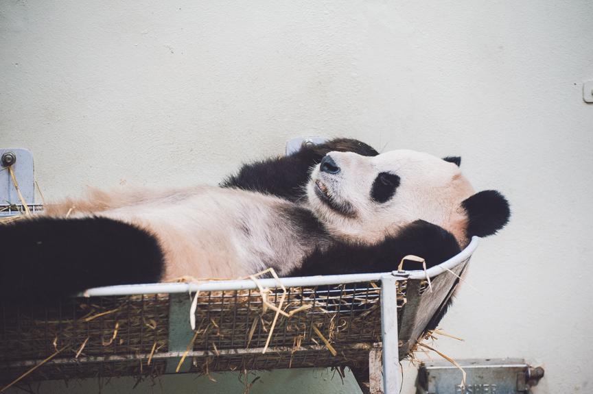 panda-blog-october-25-2012-4-of-10