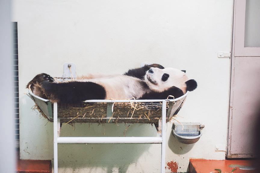 panda-blog-october-25-2012-5-of-10
