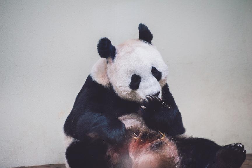 panda-blog-october-25-2012-8-of-10