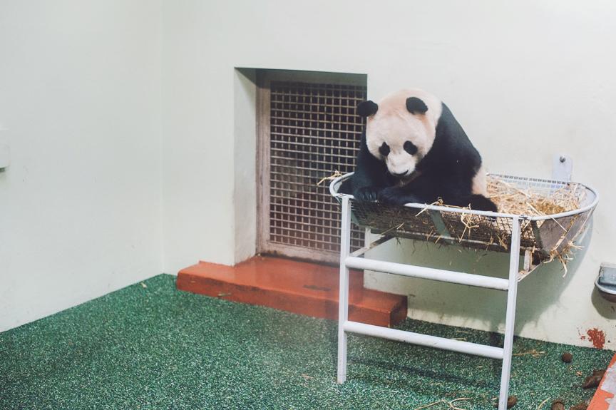 panda-blog-october-25-2012-9-of-10